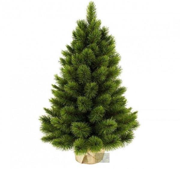 Ель Triumph Tree Триумф Норд 90 см (в мешочке)