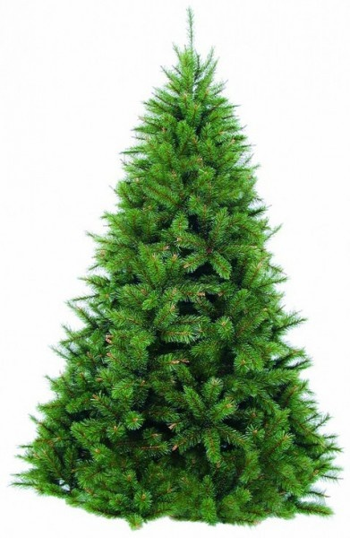 Ель Triumph Tree Нормандия стройная 185 см