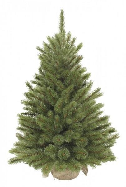 Ель Triumph Tree Лесная красавица 60 см (в мешочке)